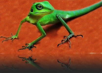 Green Lizard Jigsaw Puzzle