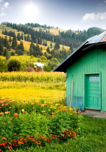 Green Shed Jigsaw Puzzle