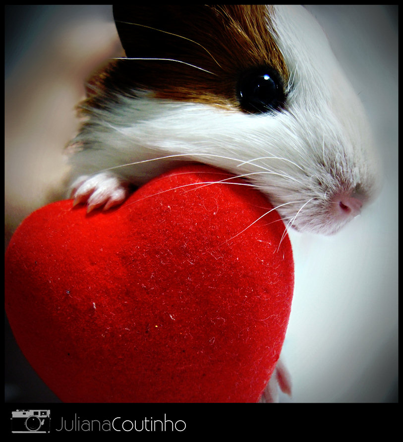 Guinea Pig Heart Jigsaw Puzzle. February 14, 2011 · Photograph by Juliana