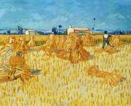 Harvest in Provence