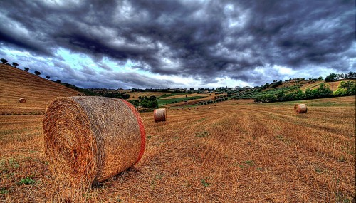 Hay Bales Jigsaw Puzzle