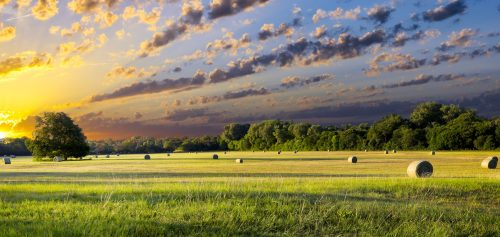 Hay Field Jigsaw Puzzle