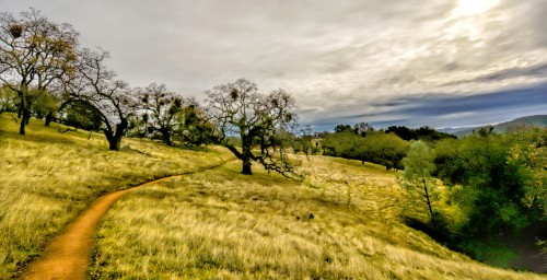Henry Coe Park Jigsaw Puzzle