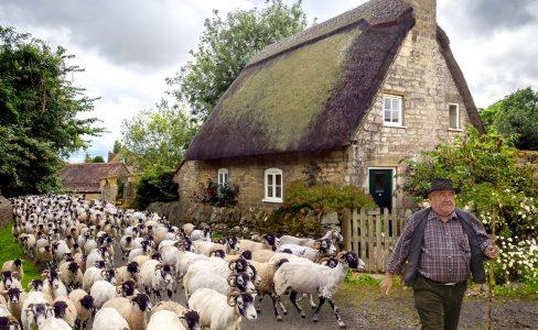 Herding Goats Jigsaw Puzzle