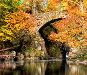 Hermitage Bridge Jigsaw Puzzle