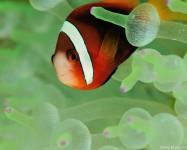 Hiding Fish