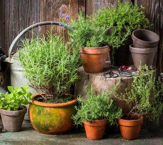 Homegrown Herbs Jigsaw Puzzle