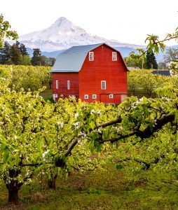 Hood River Valley Barn Jigsaw Puzzle