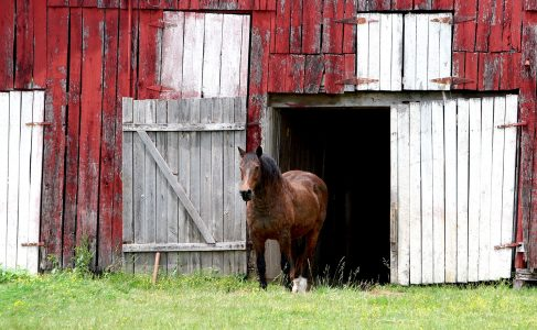 Horse and Barn Jigsaw Puzzle