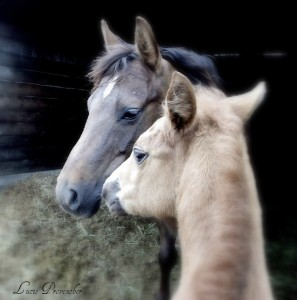 Horse and Mare Jigsaw Puzzle