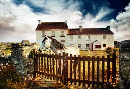 Horse at the Gate Jigsaw Puzzle