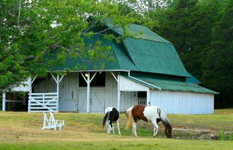 Horse Barn Jigsaw Puzzle