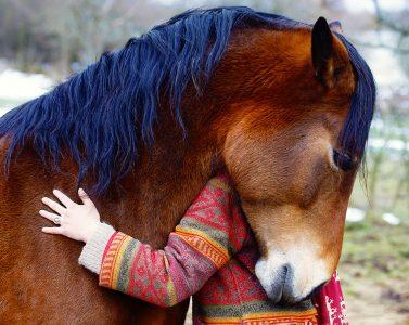 Horse Hug Jigsaw Puzzle