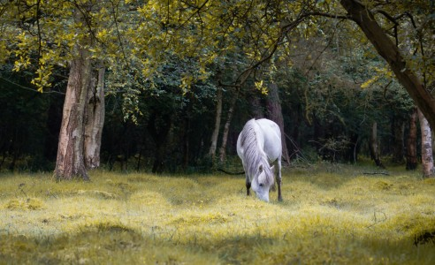 Horse in Forest Jigsaw Puzzle