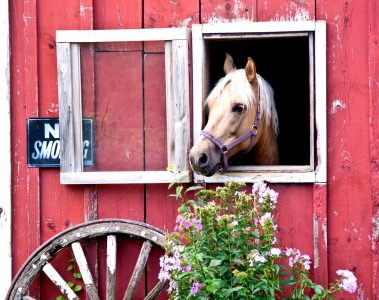 Horse View Jigsaw Puzzle