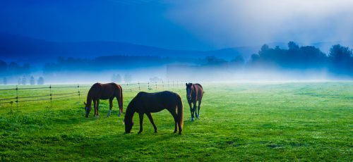 Horses Grazing Jigsaw Puzzle