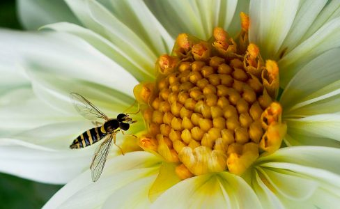 Hoverfly Jigsaw Puzzle