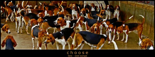Hunting Dogs Jigsaw Puzzle