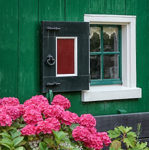 Hydrangeas and Window Jigsaw Puzzle