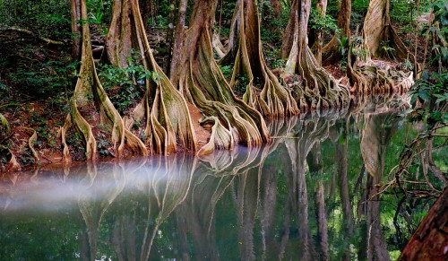 Indian River Jigsaw Puzzle