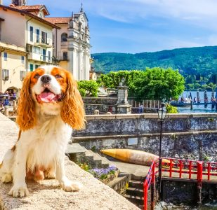 Isola Bella Dog Jigsaw Puzzle