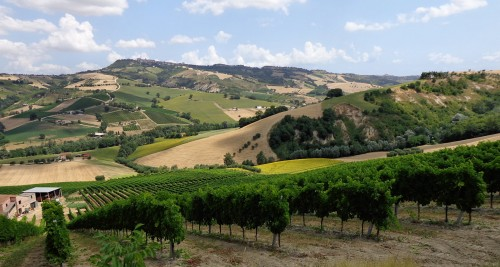 Italian Vineyard Jigsaw Puzzle