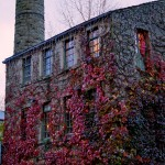 Ivy and Stone