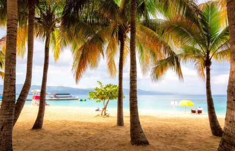 Jamaican Palms Jigsaw Puzzle