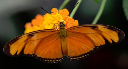 Julia Butterfly Jigsaw Puzzle