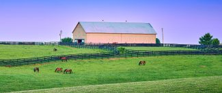 Kentucky Grazing