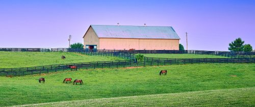 Kentucky Grazing Jigsaw Puzzle