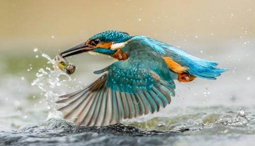 Kingfisher Flight Jigsaw Puzzle
