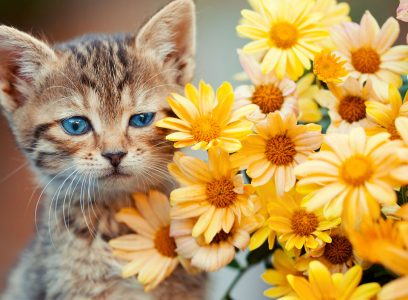 Kitten and Flowers Jigsaw Puzzle