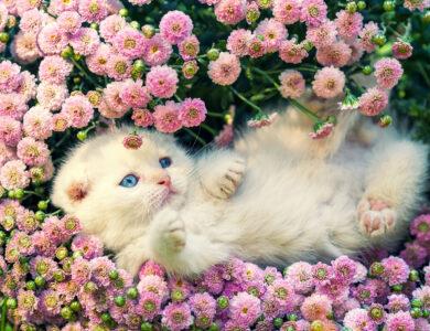 Kitten in Flowers Jigsaw Puzzle