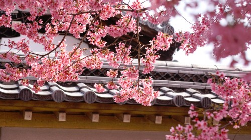 Kyoto Blossoms Jigsaw Puzzle