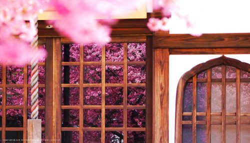 Kyoto Cherry Blossoms Jigsaw Puzzle