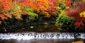 Kyoto Waterfall