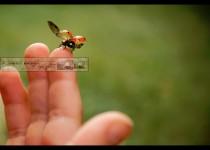 Ladybug Launch