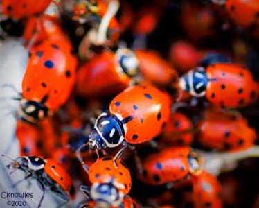 Ladybugs Jigsaw Puzzle