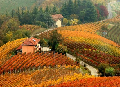 Langhe Vineyard Jigsaw Puzzle