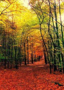 Leafy Trail Jigsaw Puzzle