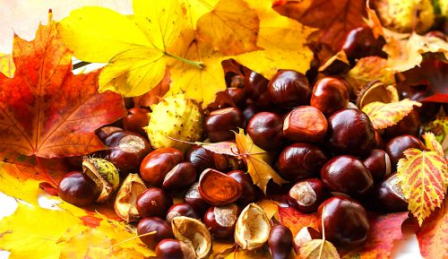 Leaves and Chestnuts Jigsaw Puzzle