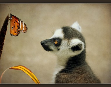 Lemur and Butterfly Jigsaw Puzzle