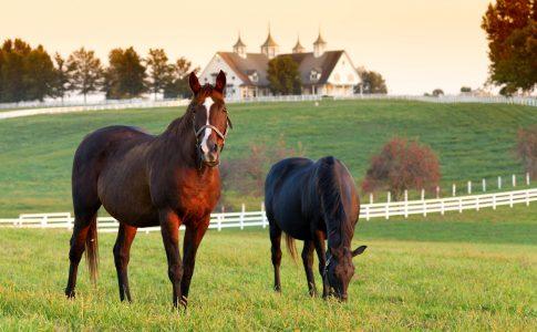 Lexington Horses Jigsaw Puzzle