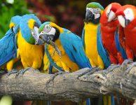 Limb of Parrots
