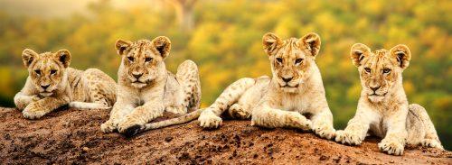 Lion Cubs Jigsaw Puzzle