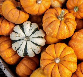 Little Gourds Jigsaw Puzzle