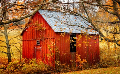 Little Red Barn Jigsaw Puzzle