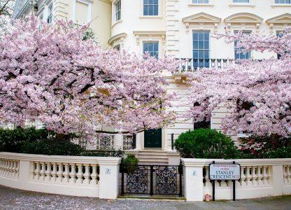 London Cherry Trees Jigsaw Puzzle