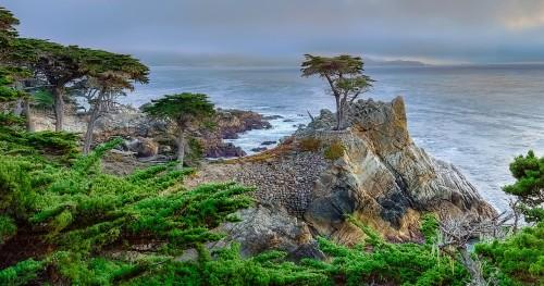 Lone Cypress Jigsaw Puzzle